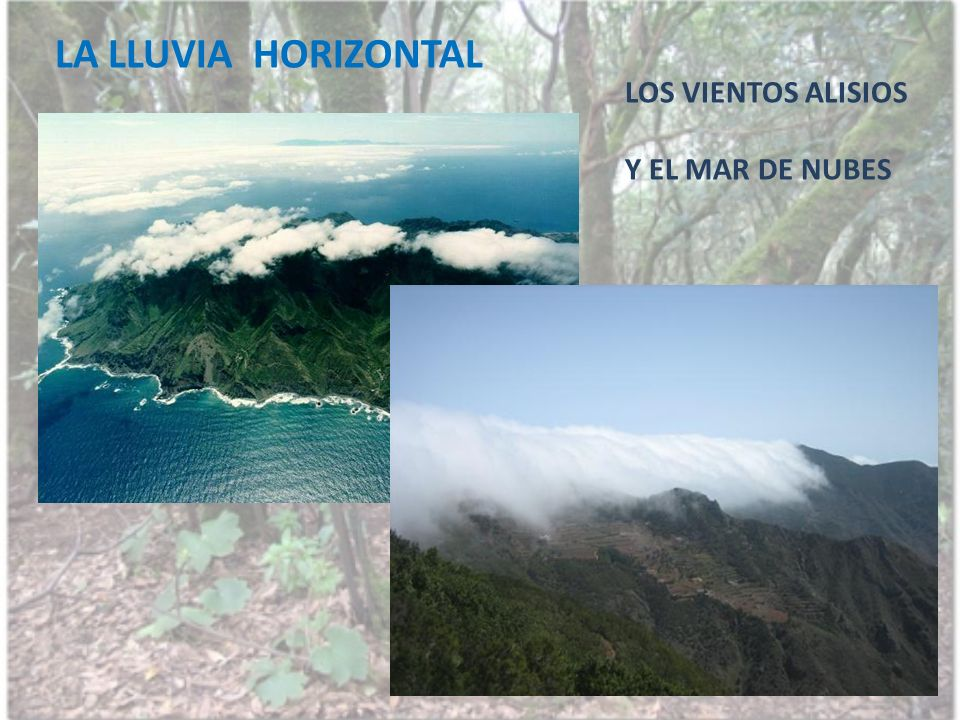 LA LLUVIA HORIZONTAL LOS VIENTOS ALISIOS Y EL MAR DE NUBES