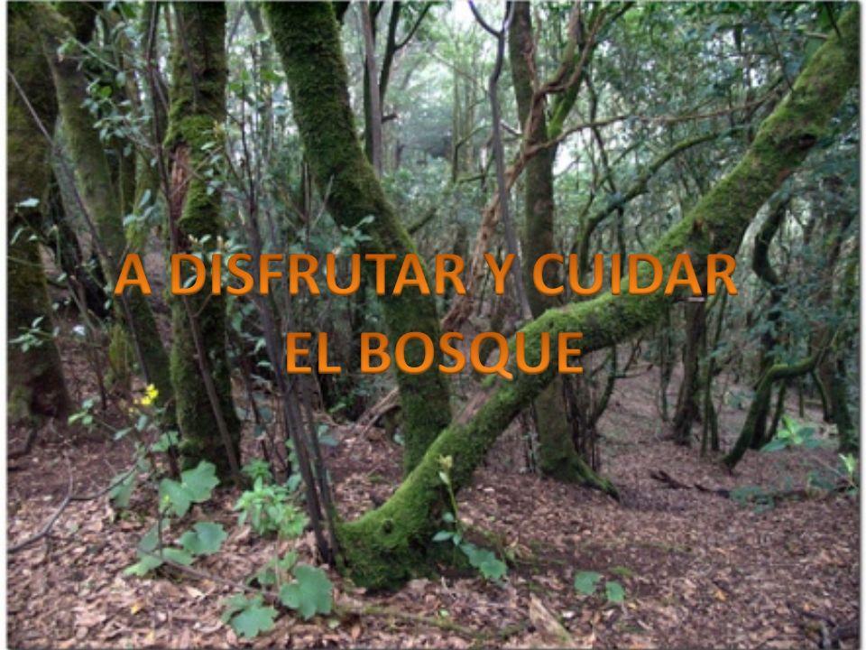A DISFRUTAR Y CUIDAR EL BOSQUE