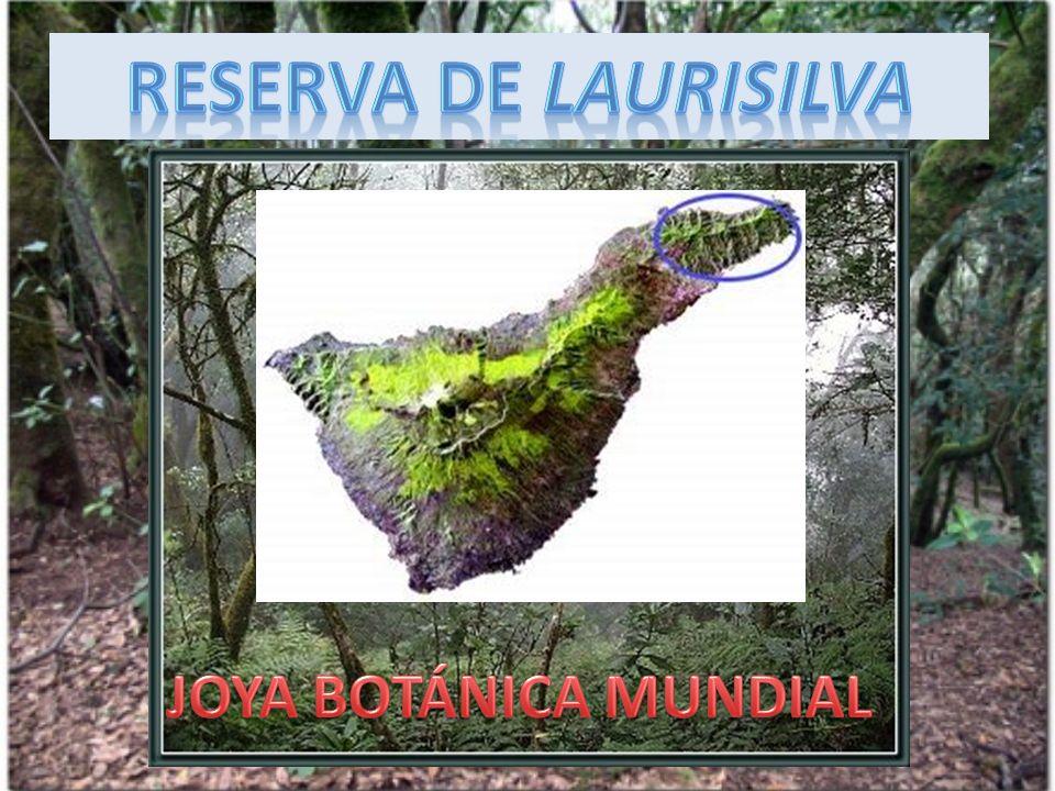 RESERVA DE LAURISILVA JOYA BOTÁNICA MUNDIAL