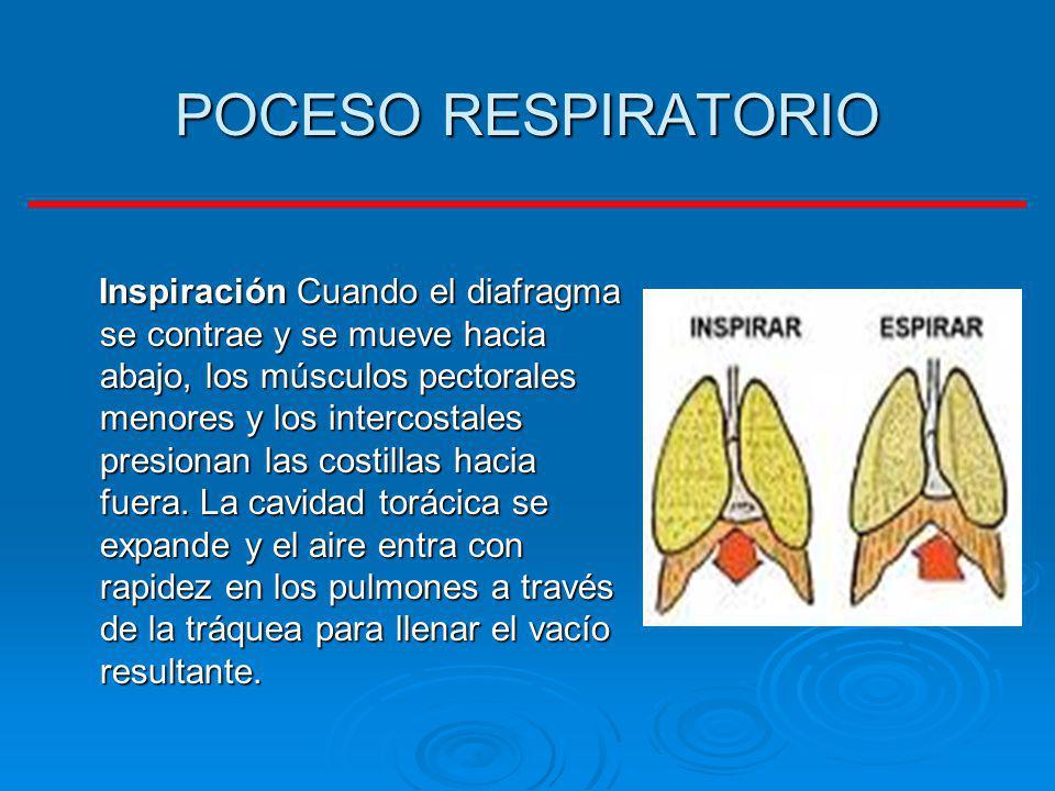 POCESO RESPIRATORIO