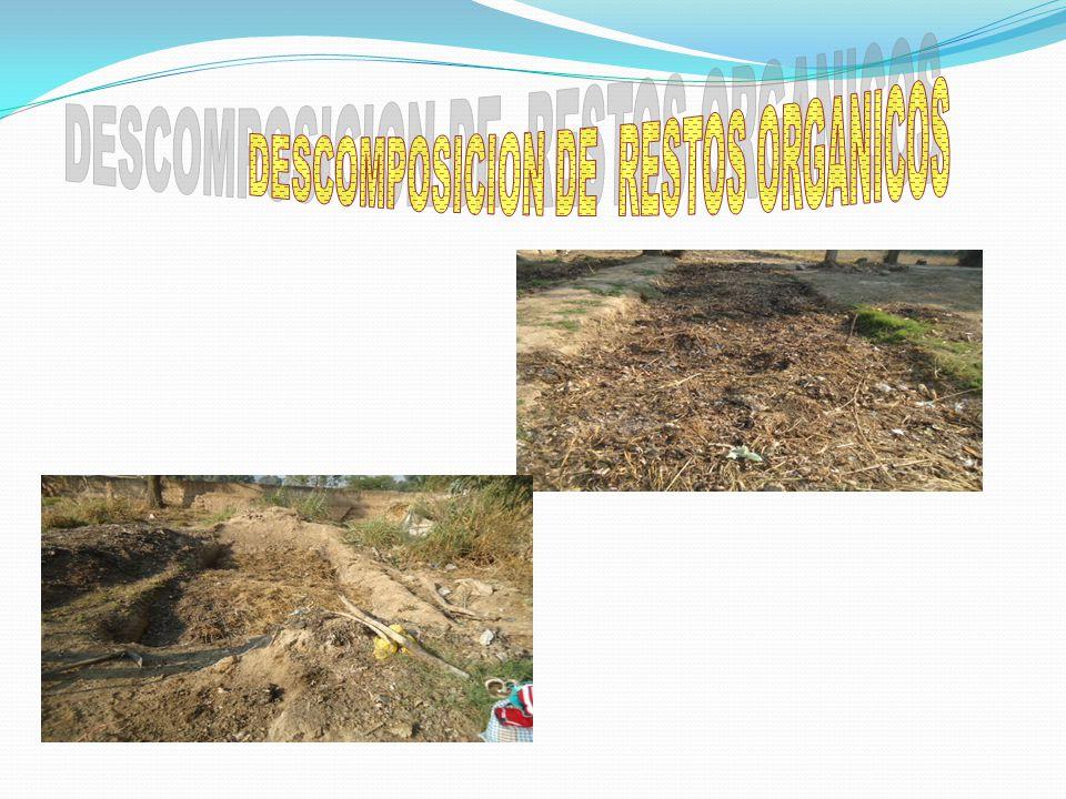 DESCOMPOSICION DE RESTOS ORGANICOS