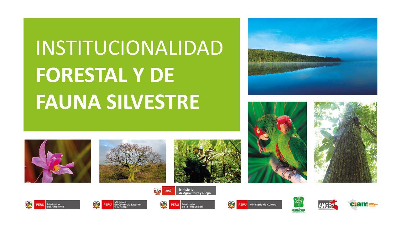 INSTITUCIONALIDAD FORESTAL Y DE FAUNA SILVESTRE