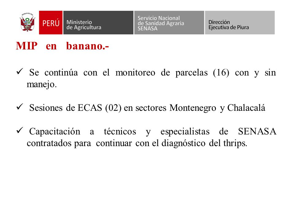 MIP en banano.- Se continúa con el monitoreo de parcelas (16) con y sin manejo. Sesiones de ECAS (02) en sectores Montenegro y Chalacalá.