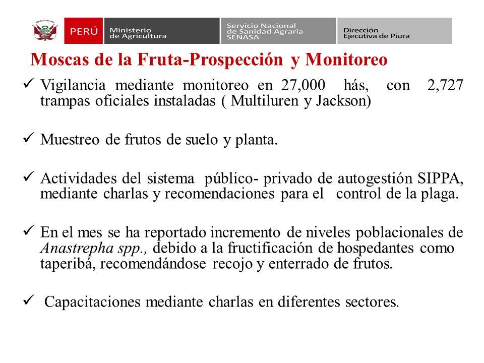 Moscas de la Fruta-Prospección y Monitoreo
