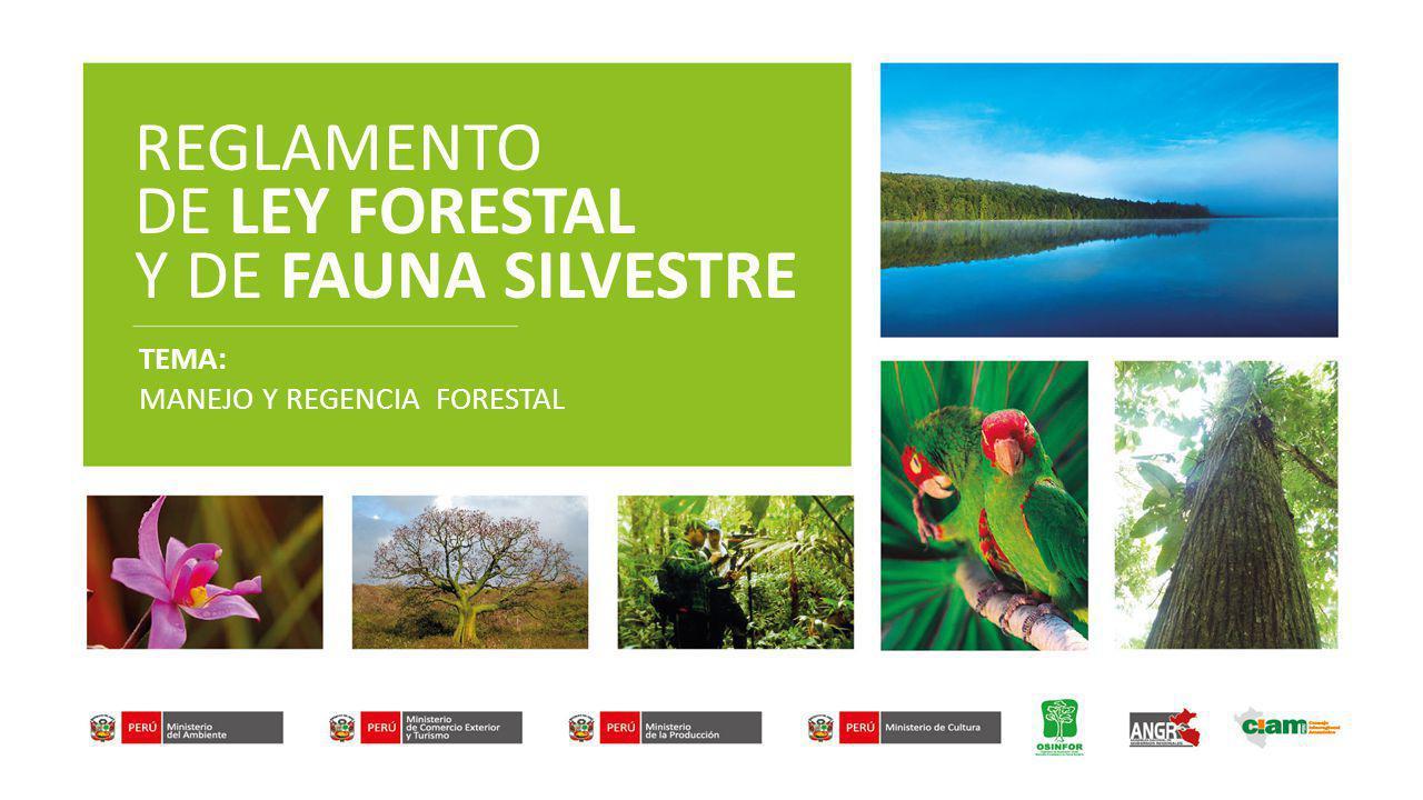 REGLAMENTO DE LEY FORESTAL Y DE FAUNA SILVESTRE TEMA: