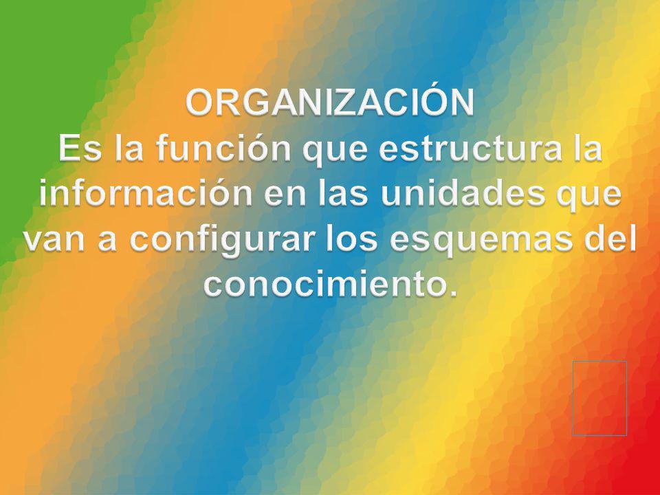 ORGANIZACIÓN Es la función que estructura la información en las unidades que van a configurar los esquemas del conocimiento.