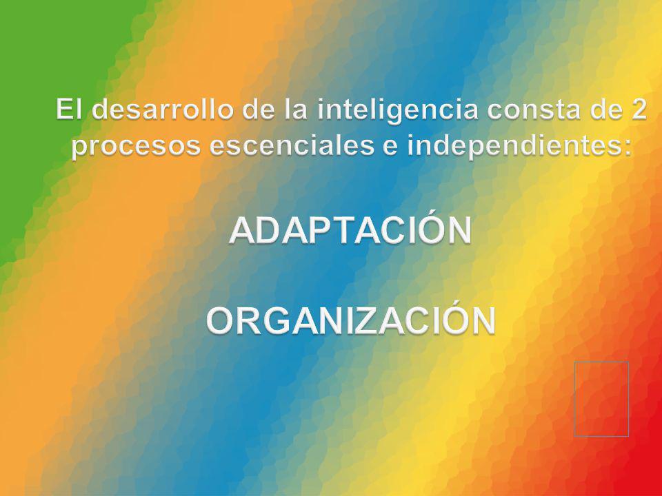 El desarrollo de la inteligencia consta de 2 procesos escenciales e independientes: ADAPTACIÓN ORGANIZACIÓN