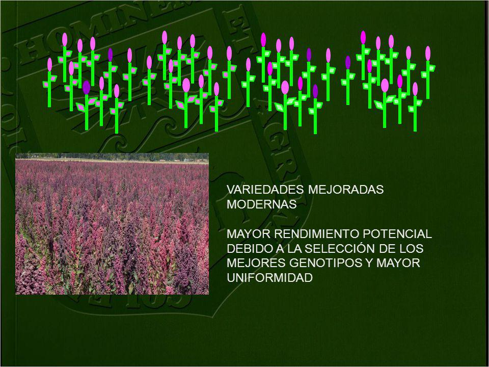 VARIEDADES MEJORADAS MODERNAS