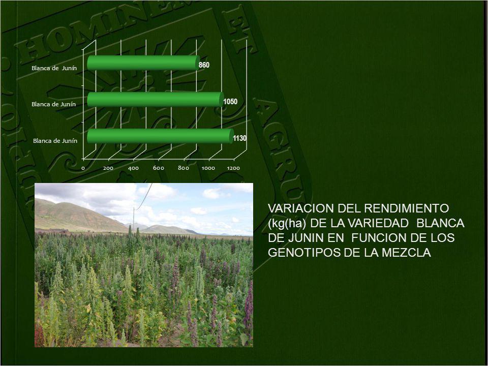 VARIACION DEL RENDIMIENTO (kg(ha) DE LA VARIEDAD BLANCA DE JUNIN EN FUNCION DE LOS GENOTIPOS DE LA MEZCLA