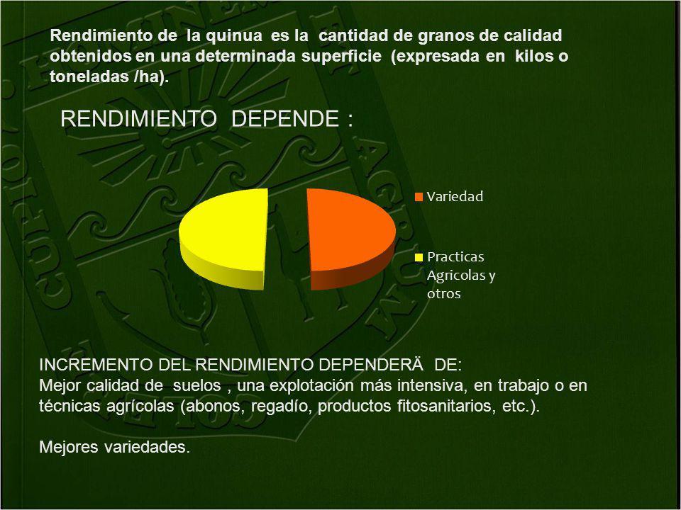 Rendimiento de la quinua es la cantidad de granos de calidad obtenidos en una determinada superficie (expresada en kilos o toneladas /ha).