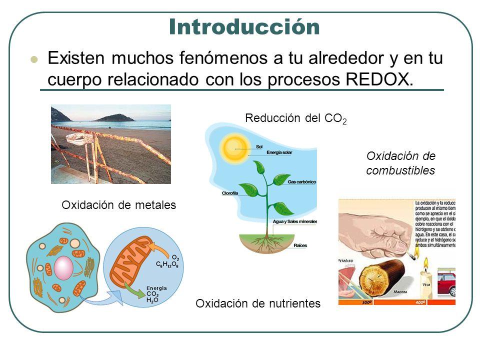 Introducción Existen muchos fenómenos a tu alrededor y en tu cuerpo relacionado con los procesos REDOX.