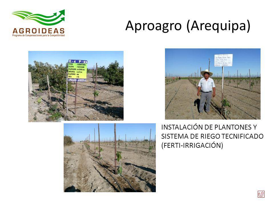 Aproagro (Arequipa) INSTALACIÓN DE PLANTONES Y