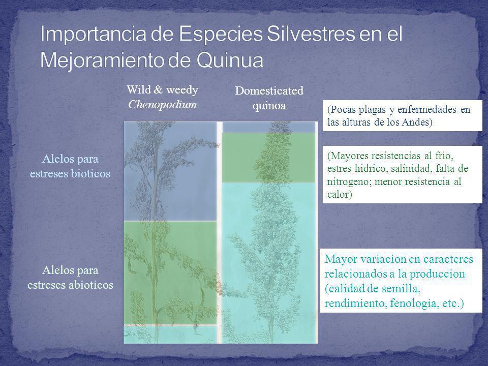 Importancia de Especies Silvestres en el Mejoramiento de Quinua