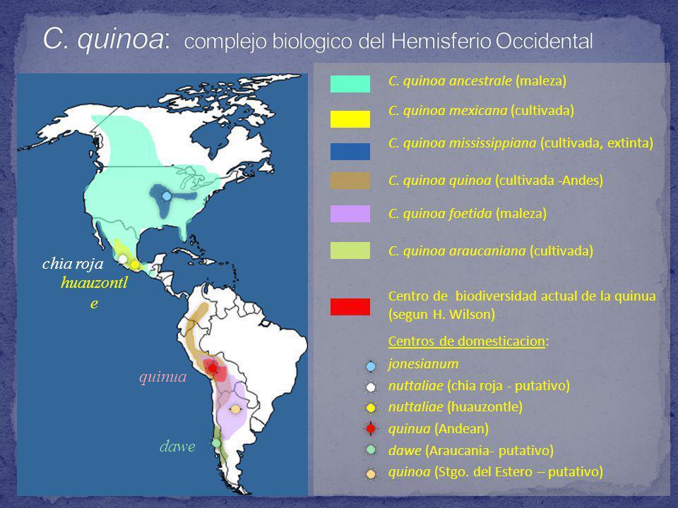 C. quinoa: complejo biologico del Hemisferio Occidental