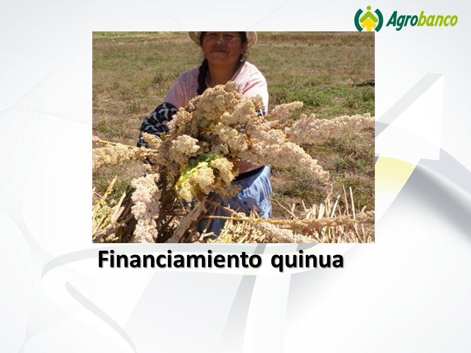 Financiamiento quinua
