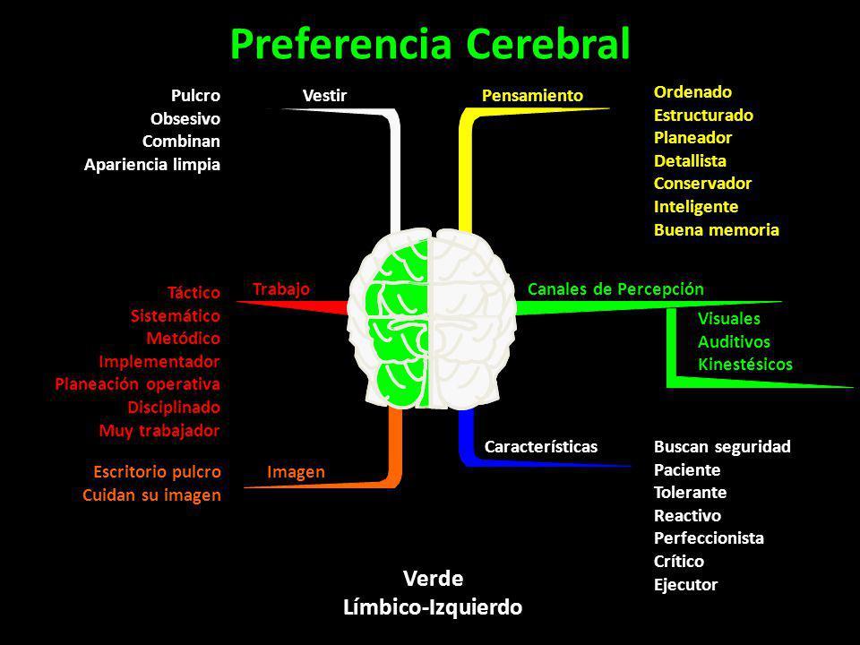 Preferencia Cerebral Verde Límbico-Izquierdo Vestir Pulcro Obsesivo