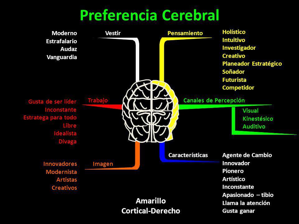 Preferencia Cerebral Amarillo Cortical-Derecho Vestir Moderno