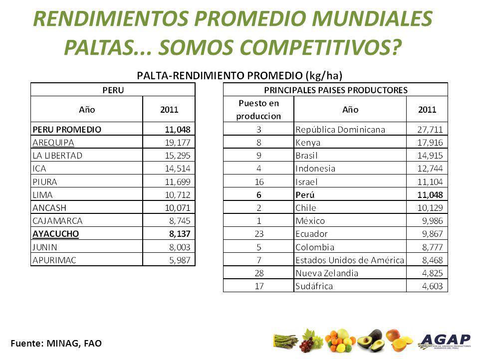 RENDIMIENTOS PROMEDIO MUNDIALES PALTAS... SOMOS COMPETITIVOS