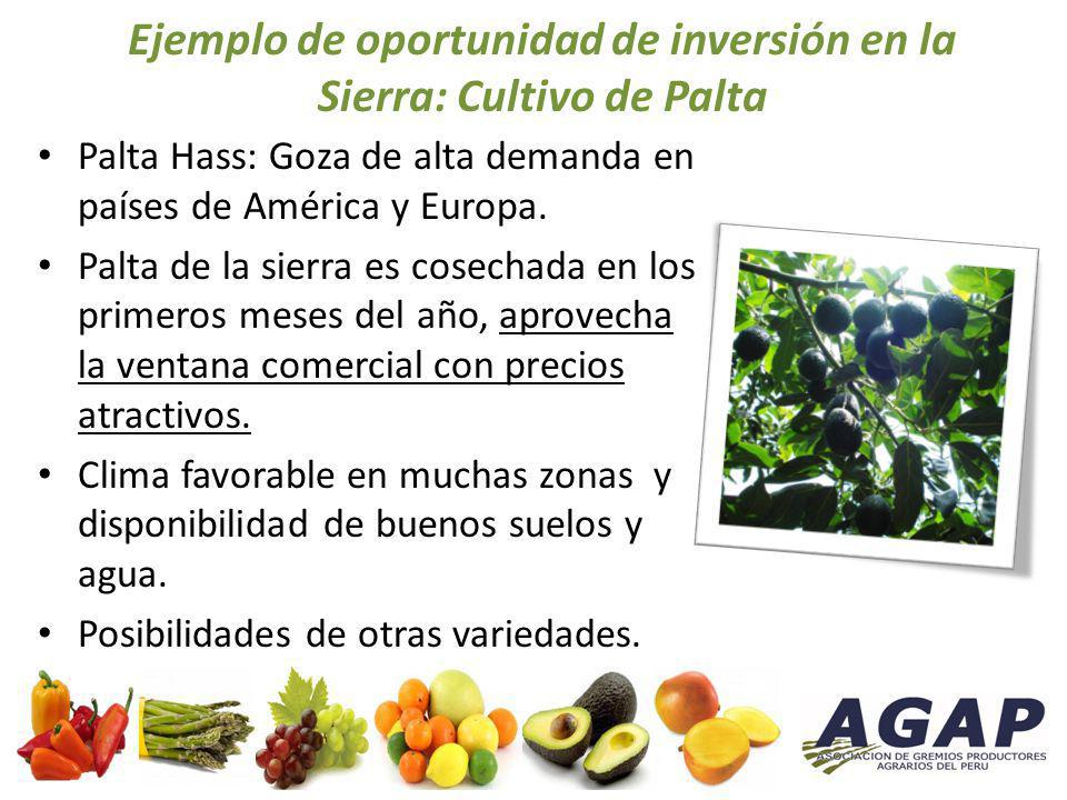 Ejemplo de oportunidad de inversión en la Sierra: Cultivo de Palta