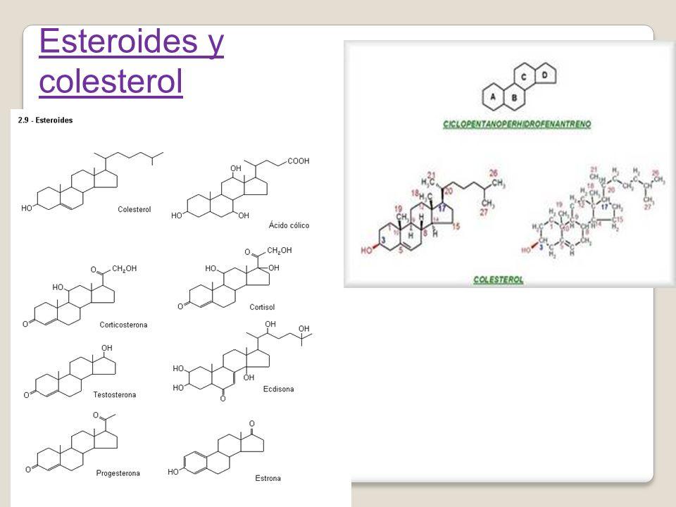Esteroides y colesterol