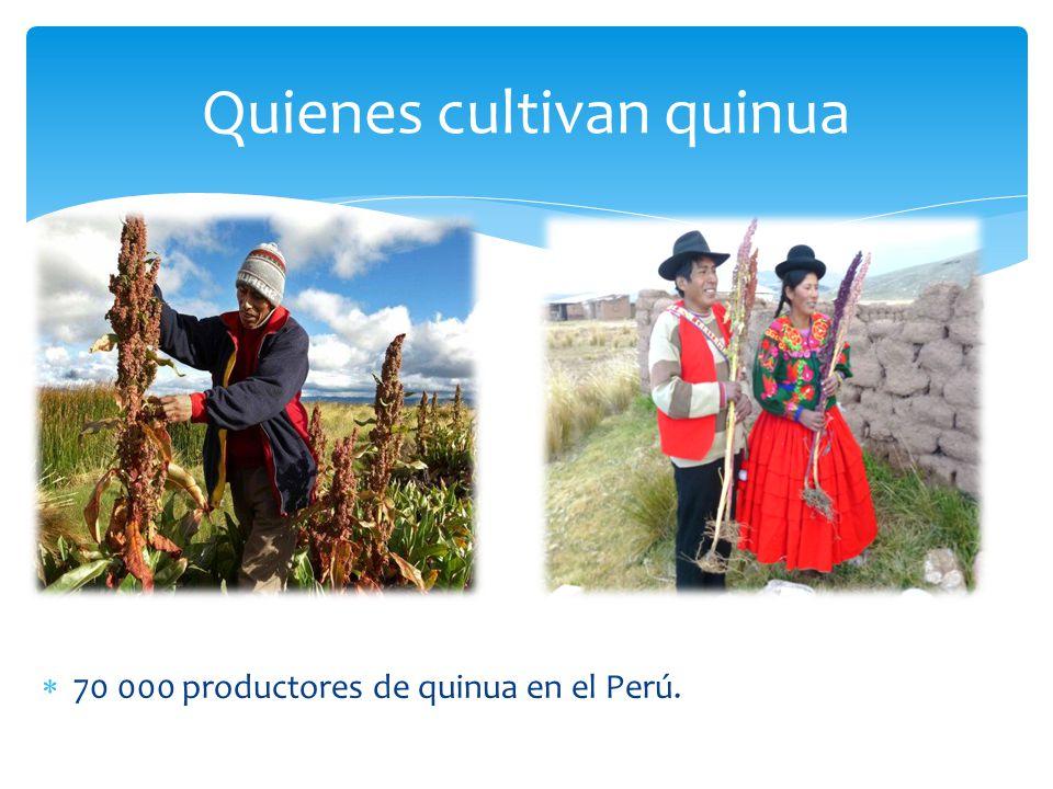 Quienes cultivan quinua