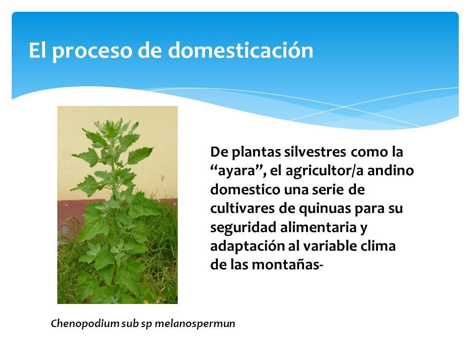 El proceso de domesticación