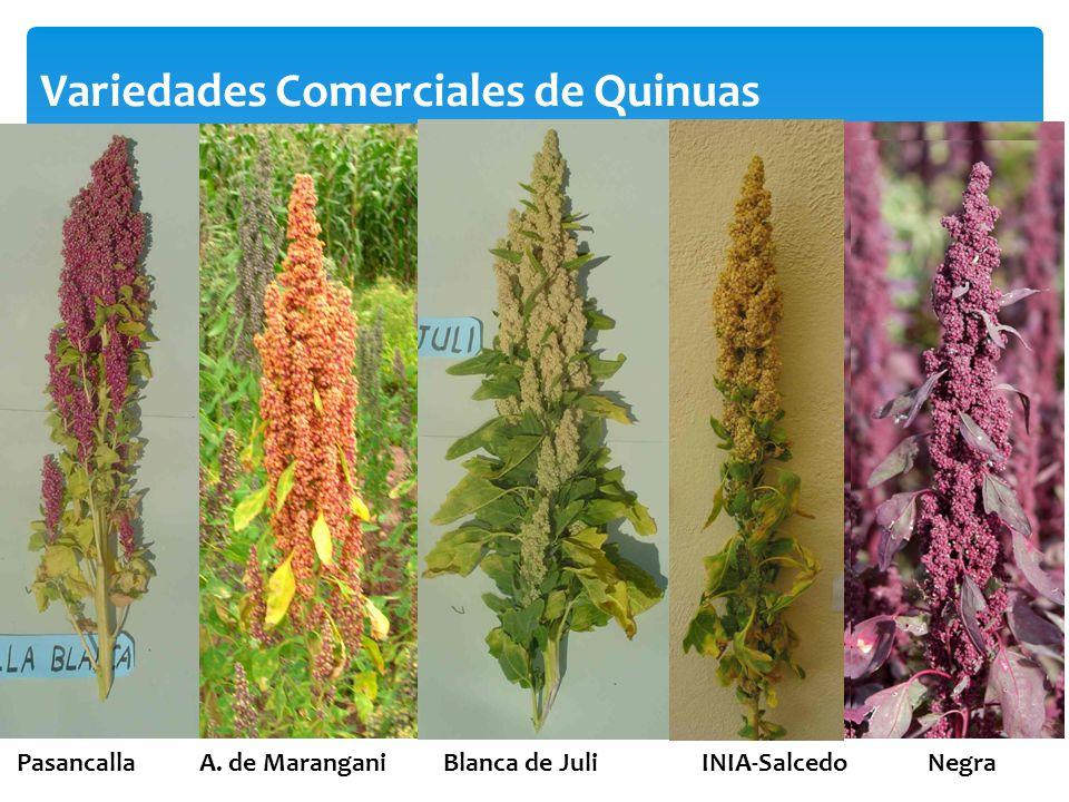 Variedades Comerciales de Quinuas