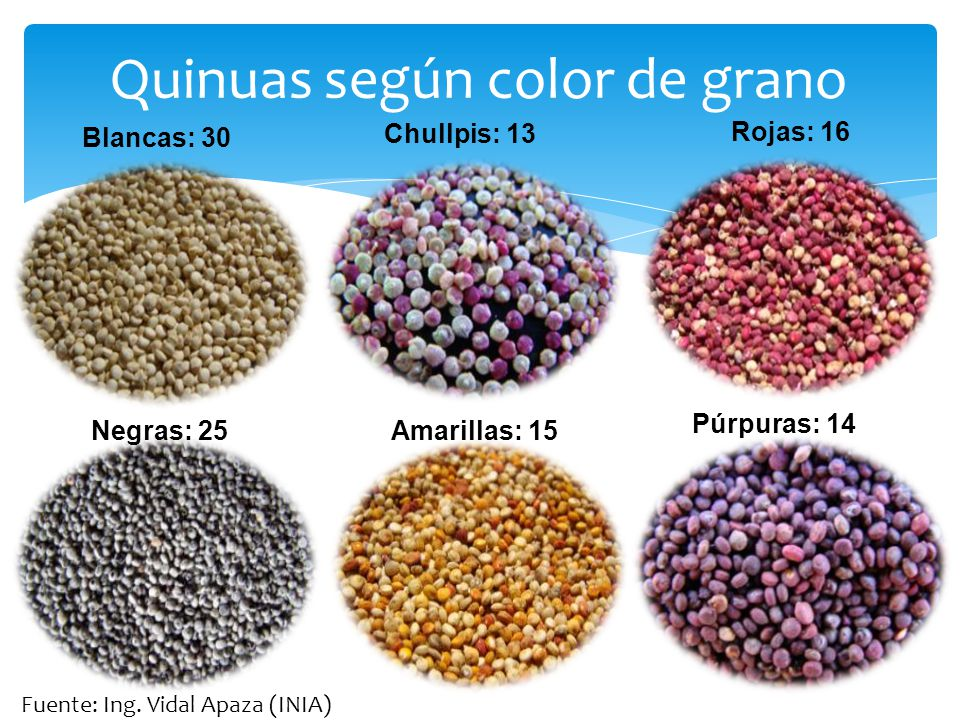 Quinuas según color de grano