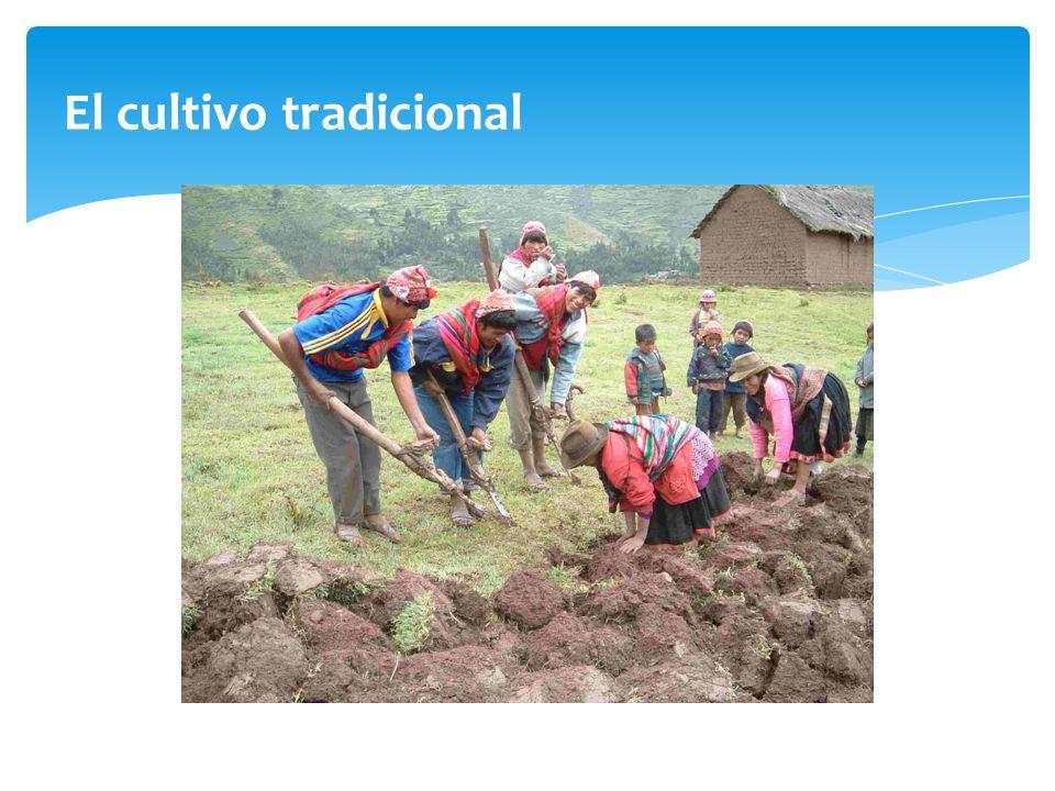 El cultivo tradicional