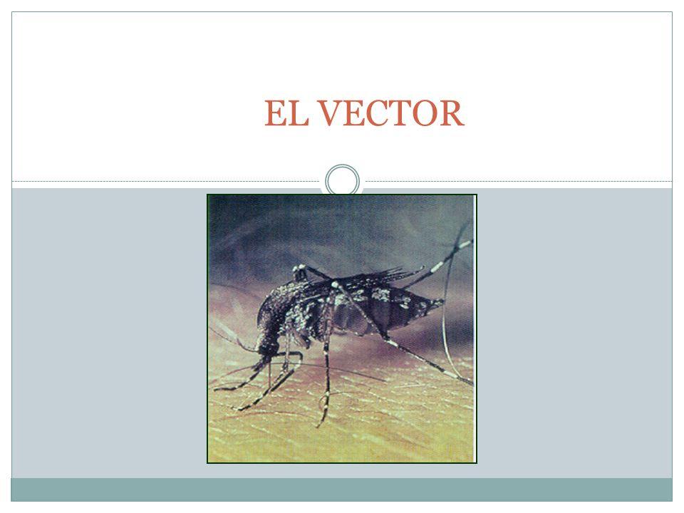 EL VECTOR
