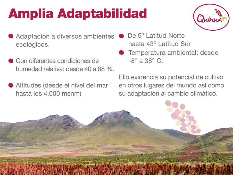 La quinua posee una amplia adaptabilidad, esto se sustenta en que en la actualidad en Sudamérica se cultiva en gran diversidad de ambientes ecológicos: