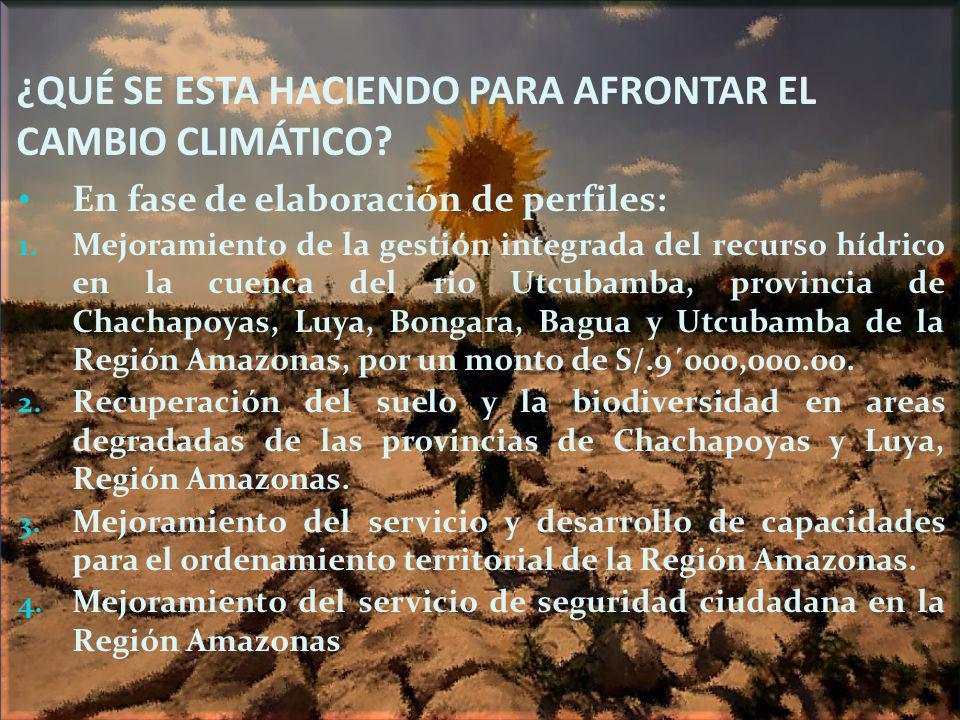 ¿QUÉ SE ESTA HACIENDO PARA AFRONTAR EL CAMBIO CLIMÁTICO