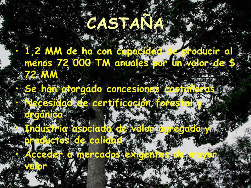 CASTAÑA 1,2 MM de ha con capacidad de producir al menos 72 000 TM anuales por un valor de $ 72 MM. Se han otorgado concesiones castañeras.