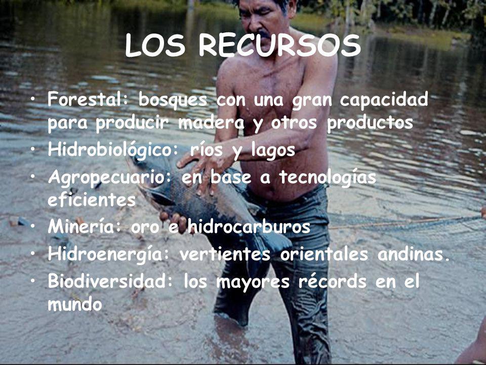 LOS RECURSOS Forestal: bosques con una gran capacidad para producir madera y otros productos. Hidrobiológico: ríos y lagos.
