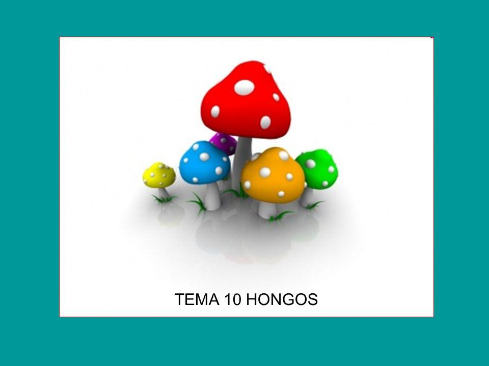 TEMA 10 HONGOS