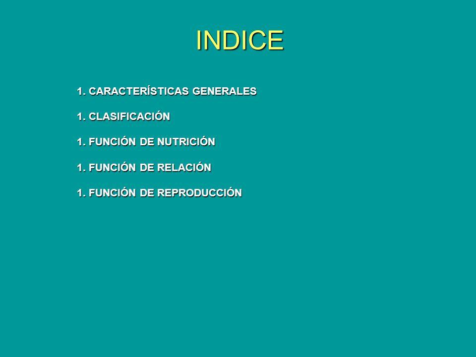 INDICE 1. CARACTERÍSTICAS GENERALES 1. CLASIFICACIÓN