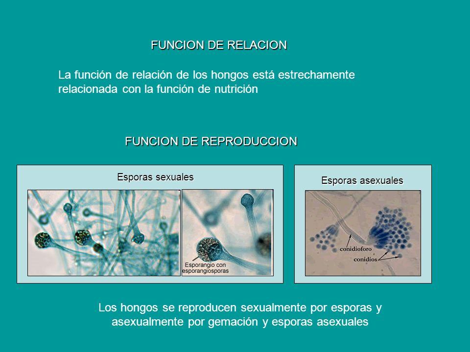 FUNCION DE REPRODUCCION