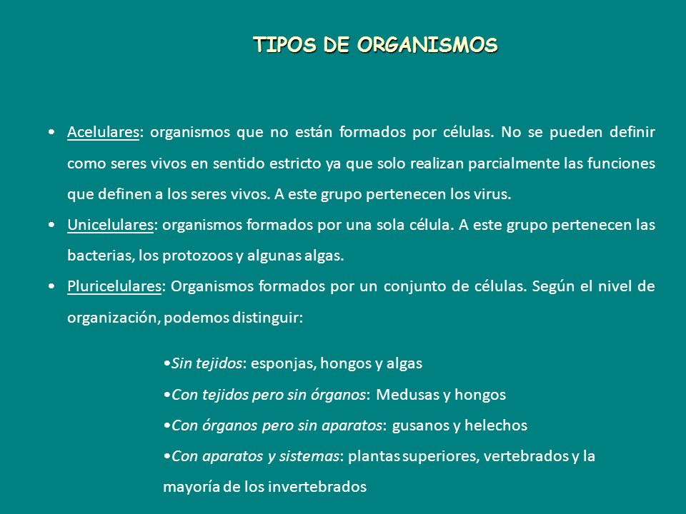 TIPOS DE ORGANISMOS
