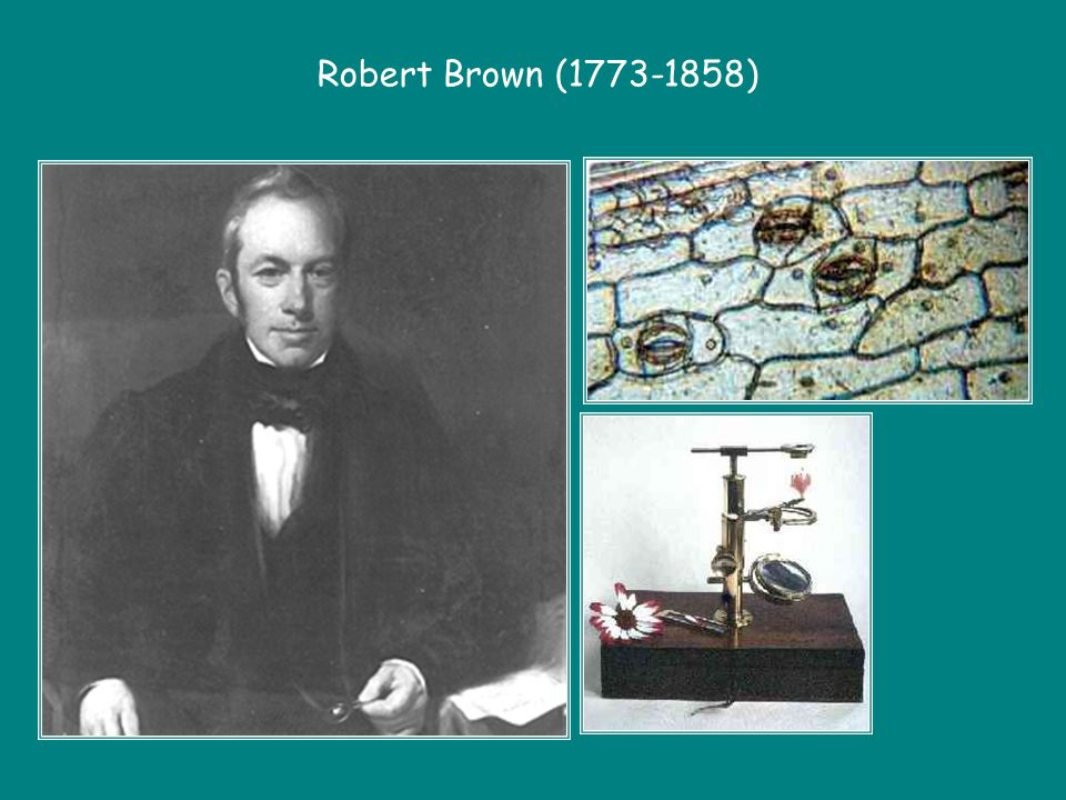 Robert Brown ( )