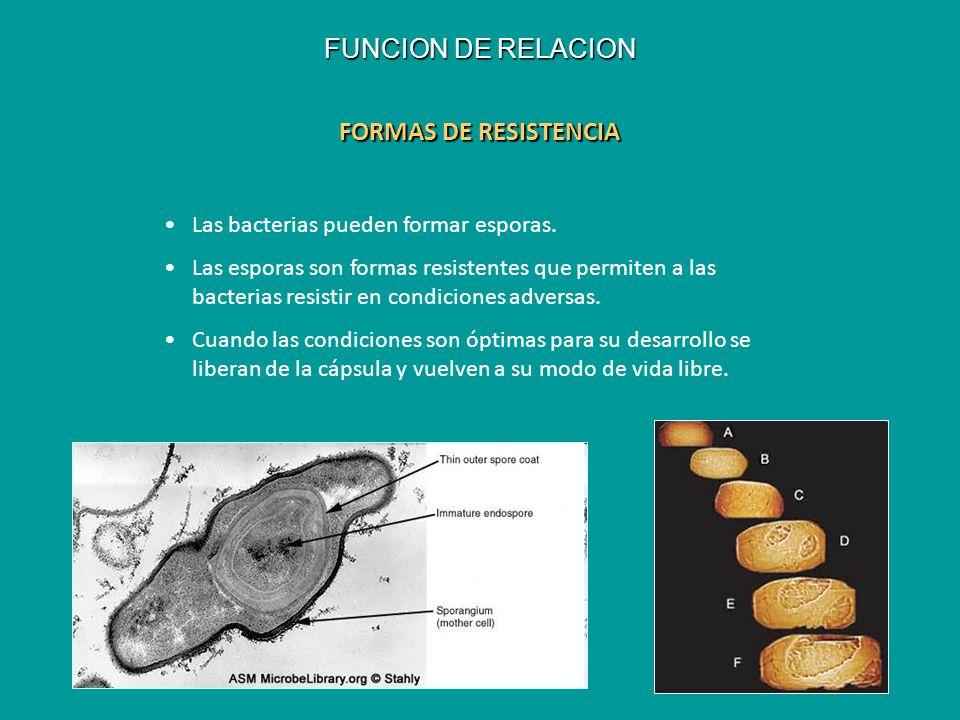 FUNCION DE RELACION FORMAS DE RESISTENCIA