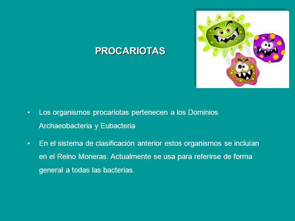 PROCARIOTAS Los organismos procariotas pertenecen a los Dominios Archaeobacteria y Eubacteria.