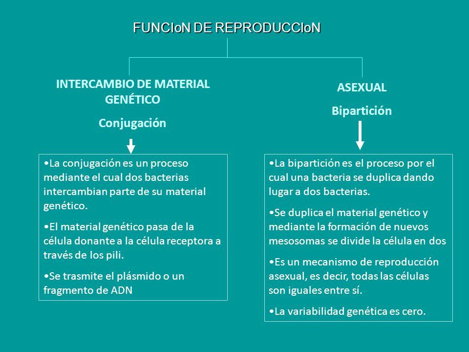INTERCAMBIO DE MATERIAL GENÉTICO