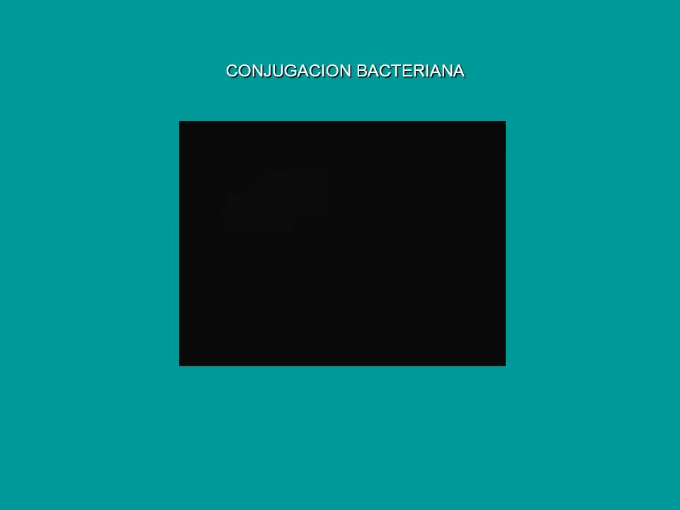 CONJUGACION BACTERIANA