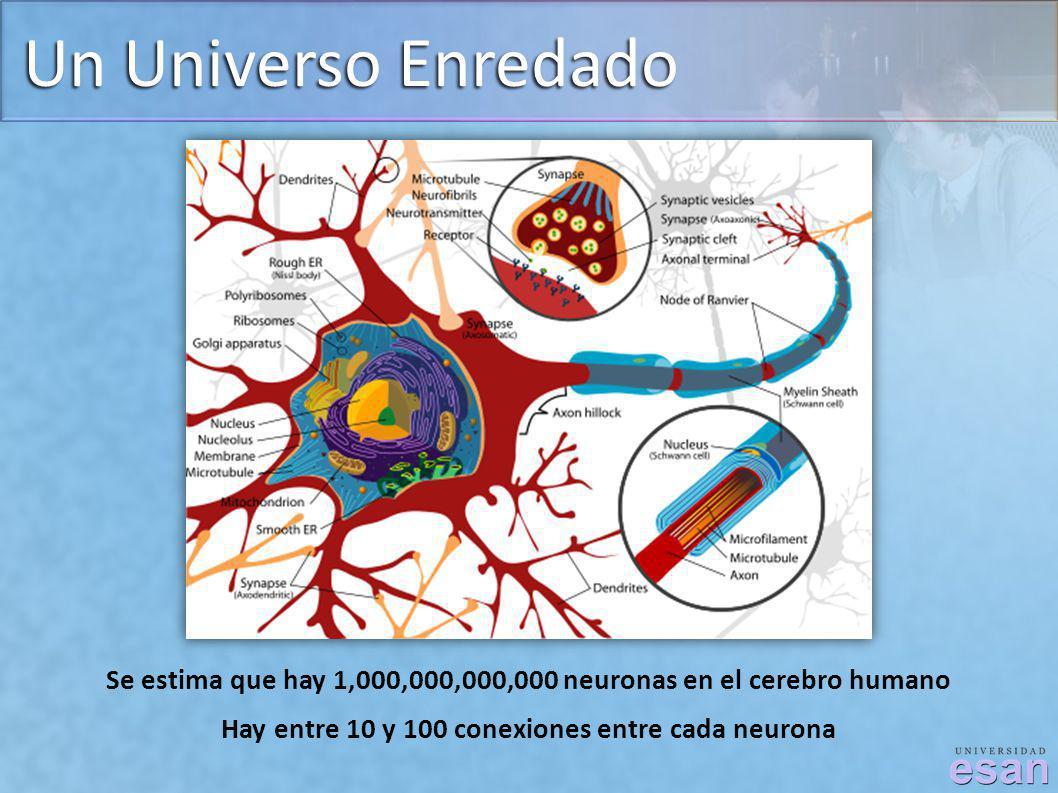 Un Universo Enredado Se estima que hay 1,000,000,000,000 neuronas en el cerebro humano.