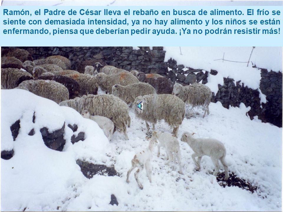 Ramón, el Padre de César lleva el rebaño en busca de alimento