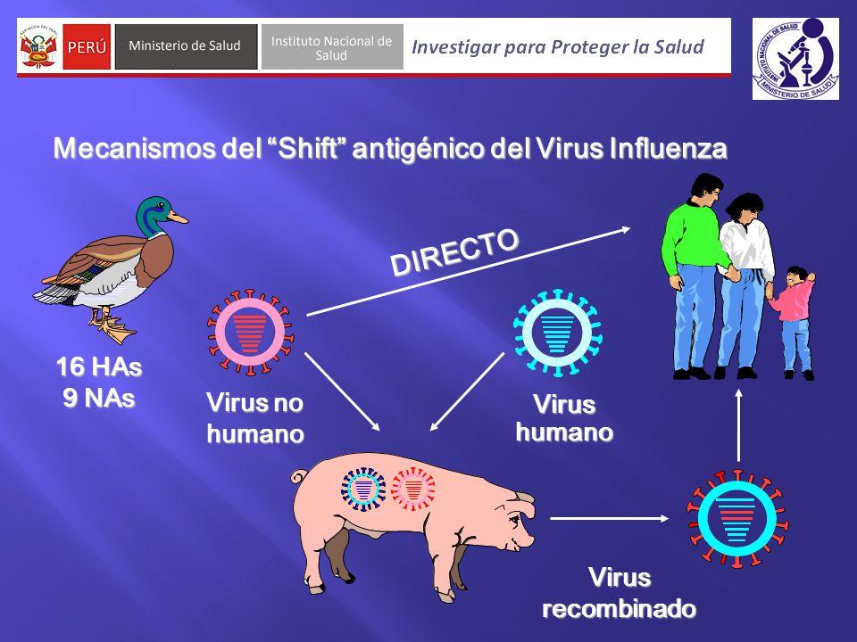 Mecanismos del Shift antigénico del Virus Influenza