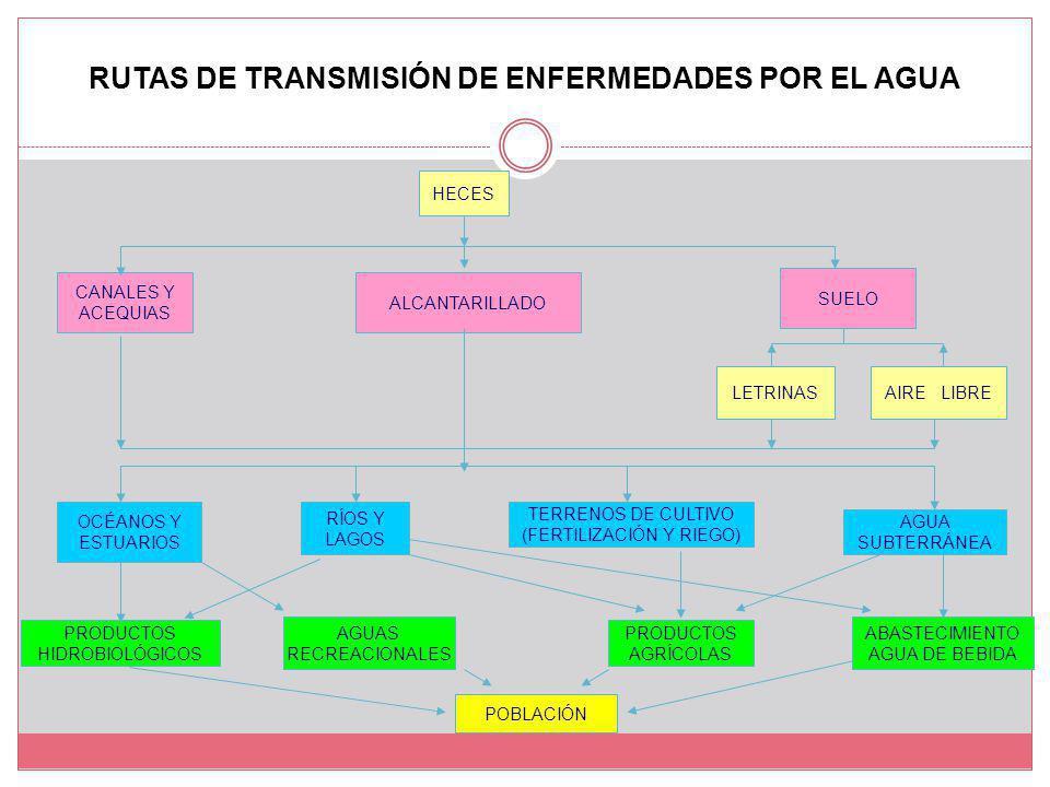 RUTAS DE TRANSMISIÓN DE ENFERMEDADES POR EL AGUA