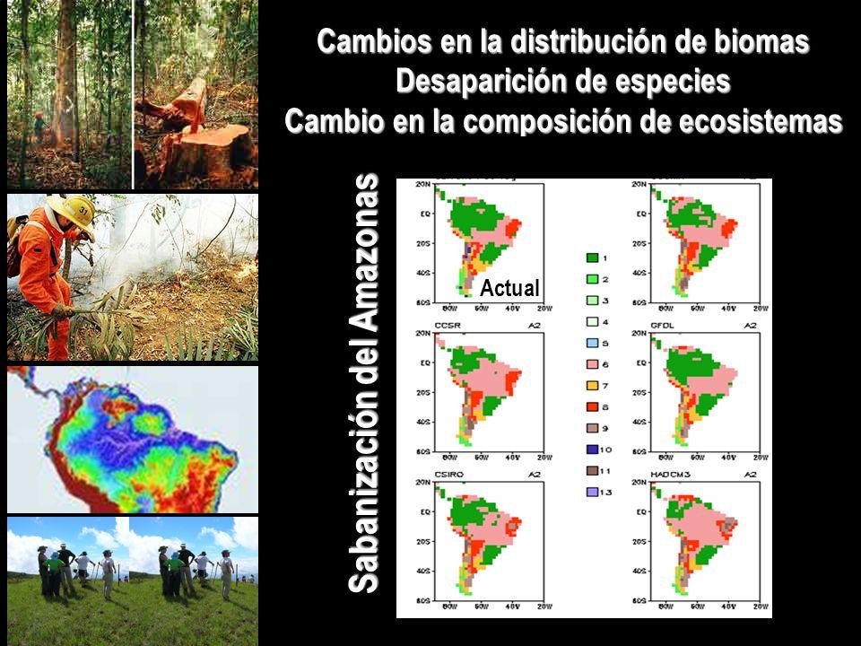 Sabanización del Amazonas