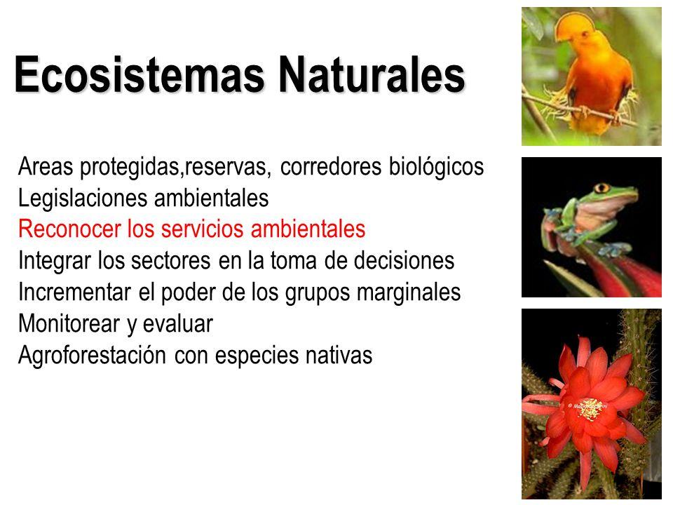 Ecosistemas Naturales