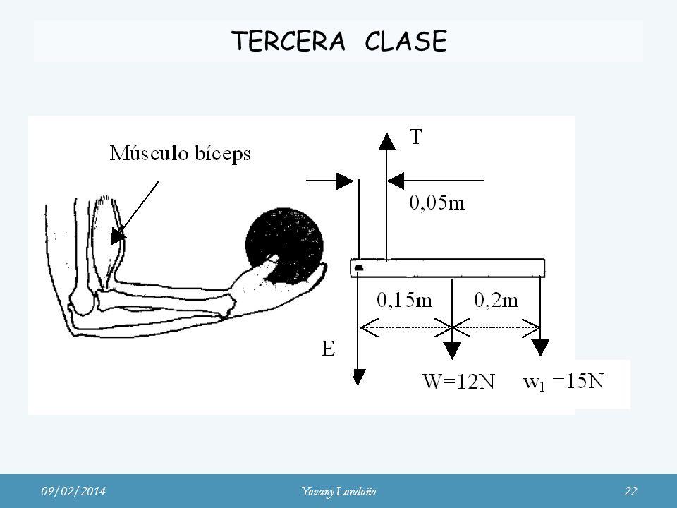TERCERA CLASE Músculo bíceps 24/03/2017 Yovany Londoño